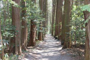 宇喜多秀家陣跡への未舗装路