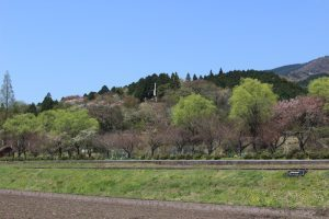 関ヶ原古戦場決戦地から笹尾山を望む